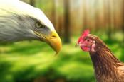 cuidado-com-os-sabotadores-que-te-fazem-ser-galinha-120x628-174x116.png