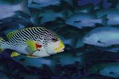nadando-contra-a-corrente-1200x628-174x116.png