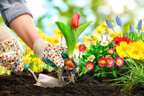 pense em si mesmo como um jardim