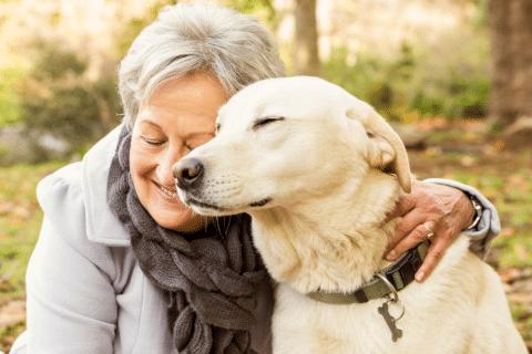 pets e bem-estar