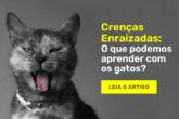 Crenças Enraizadas: O que podemos aprender com os gatos?